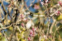 Птицы на wildflowers Стоковое фото RF