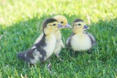 птицы небольшие На стоковое фото rf