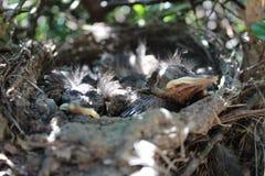 птицы немногая Стоковые Изображения RF