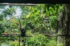 2 птицы-носорог в клетке в зоопарке Стоковые Изображения