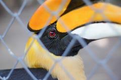 Птицы-носорог в клетке Стоковая Фотография