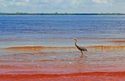 Птицы одного моря полоща в крае вод пляжа Стоковая Фотография