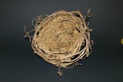 птицы опорожняют гнездй Стоковые Фотографии RF