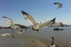Птицы острова Seongmodo чайок голодные корейские стоковое изображение