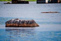 Птицы отдыхают на больших утесах в воде стоковое изображение