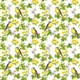 Птицы - одичалая трава, цветки флористическая картина безшовная желтый цвет акварели стародедовской предпосылки темный бумажный Стоковое Изображение