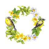 Птицы, одичалые травы, цветки Граница круга акварели Флористический венок Стоковые Фото