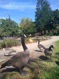 Птицы пера Стоковое Фото
