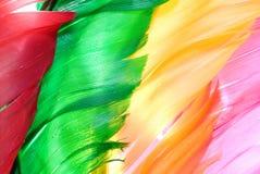 птицы перо colourfly Стоковые Изображения RF