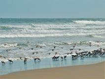 Птицы пляжа принимая полет на новый пляж Smyrna стоковое фото