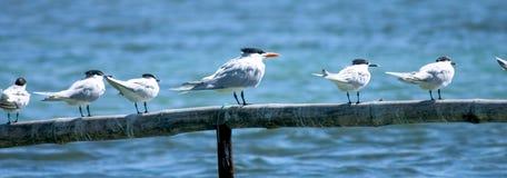 птицы пляжа Стоковые Фотографии RF