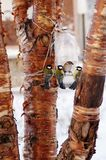 птицы подавая зима Стоковые Изображения