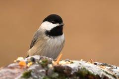 птицы подавая зима Стоковая Фотография