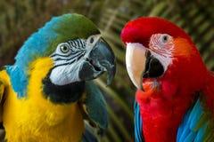 2 птицы попугая стоя бортовая - мимо - сторона Стоковое Изображение