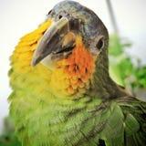 Птицы, популярно известные как птицы или птицы стоковая фотография