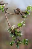 Птицы поя Стоковые Изображения
