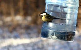 птицы подавая зима Стоковые Фотографии RF
