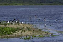 Птицы принимая полет Стоковая Фотография RF