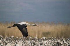 птицы проникают стоковая фотография rf