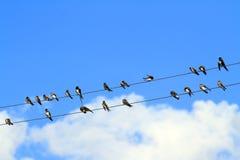 Птицы против неба Стоковое Фото