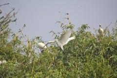 Птицы птенеца Стоковая Фотография RF