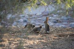 Птицы пустыни клонят быть очень более обильны где вегетация lusherее и таким образом предлагает больше насекомых, плодоовощ и сем стоковое фото rf