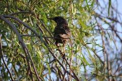 Птицы пустыни клонят быть очень более обильны где вегетация lusherее и таким образом предлагает больше насекомых, плодоовощ и сем стоковое изображение