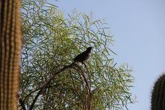 Птицы пустыни клонят быть очень более обильны где вегетация lusherее и таким образом предлагает больше насекомых, плодоовощ и сем стоковые фото