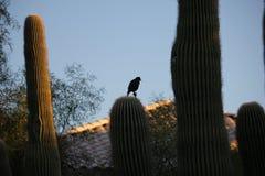 Птицы пустыни клонят быть очень более обильны где вегетация lusherее и таким образом предлагает больше насекомых, плодоовощ и сем стоковая фотография