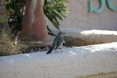 Птицы пустыни клонят быть очень более обильны где вегетация lusherее и таким образом предлагает больше насекомых, плодоовощ и сем стоковые фотографии rf