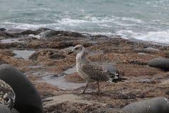 Птицы пляжа перемещения Стоковые Фото