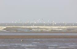 Птицы пляжа Стоковое фото RF