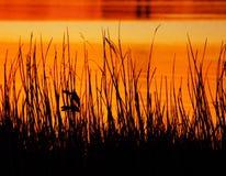 Птицы рассвета Стоковая Фотография