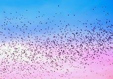 Птицы роясь в розовом и голубом небе Стоковое Изображение RF