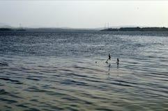 Птицы рыбной ловли Стоковая Фотография