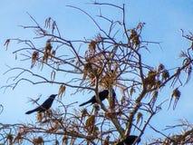 птицы садились на насест в ветвях дерева Стоковое Изображение RF