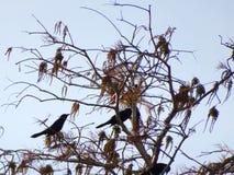 птицы садились на насест в ветвях дерева Стоковые Фотографии RF