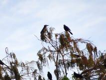птицы садились на насест в ветвях дерева Стоковые Изображения RF