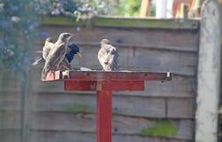 Птицы сада Стоковая Фотография RF