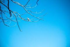 Птицы садить на насест на сухих ветвях Стоковое фото RF