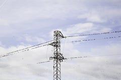 Птицы садились на насест электричество Стоковое фото RF