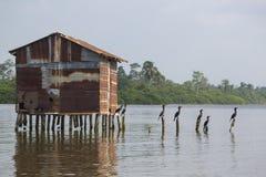 Птицы садясь на насест на конкретных штендерах, Lake Maracaibo, Венесуэле стоковые фотографии rf