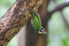 Птицы сверлят деревья стоковые изображения rf