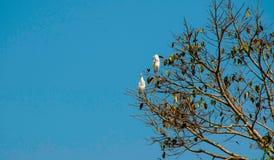 Птицы сидя на дереве Стоковое Изображение RF