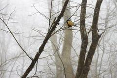 Птицы синицы на ветви в лесе зимы Стоковая Фотография RF