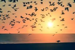 Птицы силуэта над океаном во время захода солнца Стоковая Фотография RF