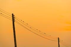 Птицы силуэта на проводе Стоковая Фотография RF