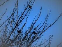 Птицы силуэта садить на насест на чуть-чуть ветвях Стоковое Изображение