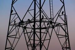 Птицы силуэта сидя на высоковольтном поляке рано вечером Стоковые Фото