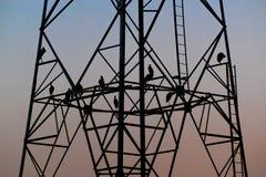 Птицы силуэта сидя на высоковольтном поляке рано вечером Стоковое Фото